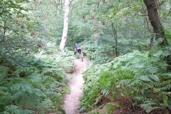 Huur mountainbikes Leersum Single tracks
