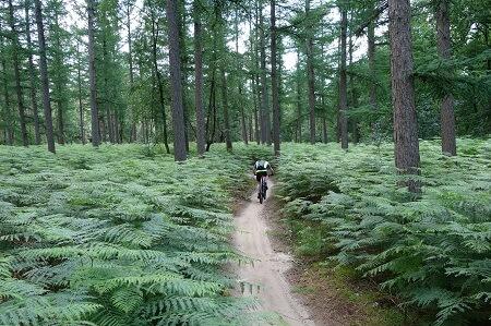 Mountainbike huren Hoge Vuursche